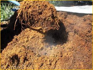 Погрузка конского перегноя на лопате
