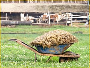 Телега с навозом для огорода