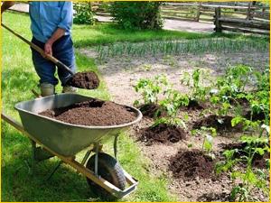 Выбираем перегной для дачи и огорода