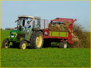 Трактор на поле наносит коровий перегной как удобрение