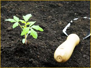 Земля для дачных растений